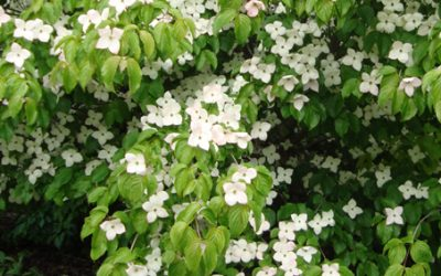 June bloomers