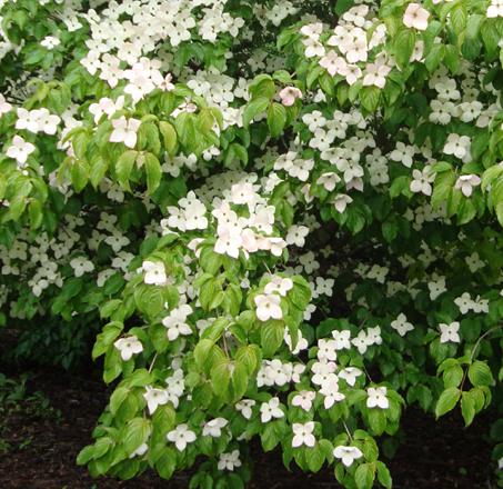 Botanical_1