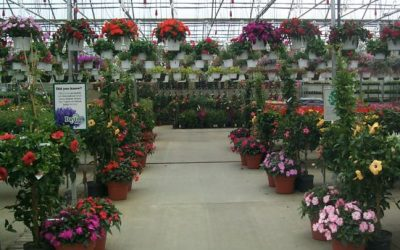 Greenhouses Ready to Open…