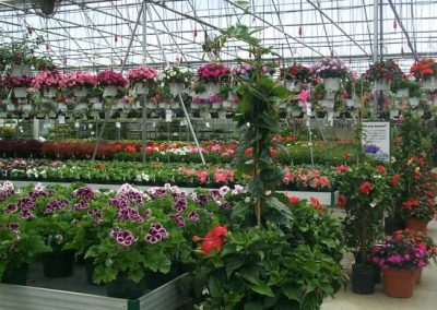 greenhouse7_square
