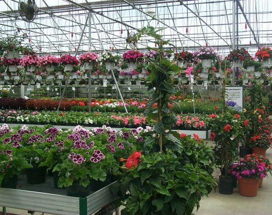 Greenhouse_7