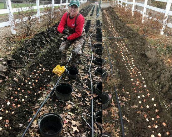 We Planted Over 8,000 Bulbs!