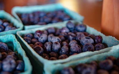 It's Blueberry Bash Week!