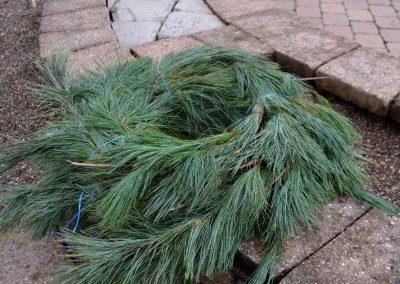 White Pine Roping 75 2018