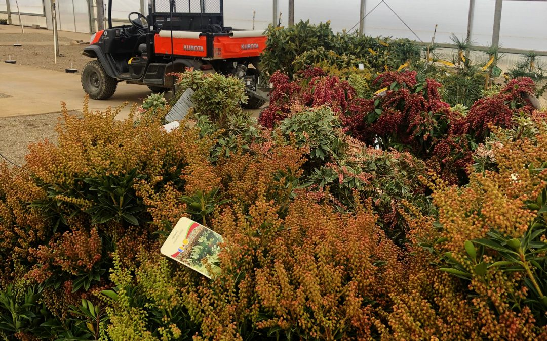 Truckloads of Plants….