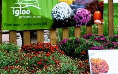 Mum Fest & Work Around the Nursery!