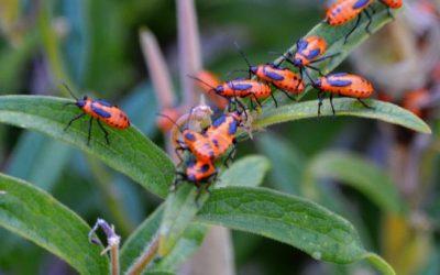 Let's Talk Bugs!