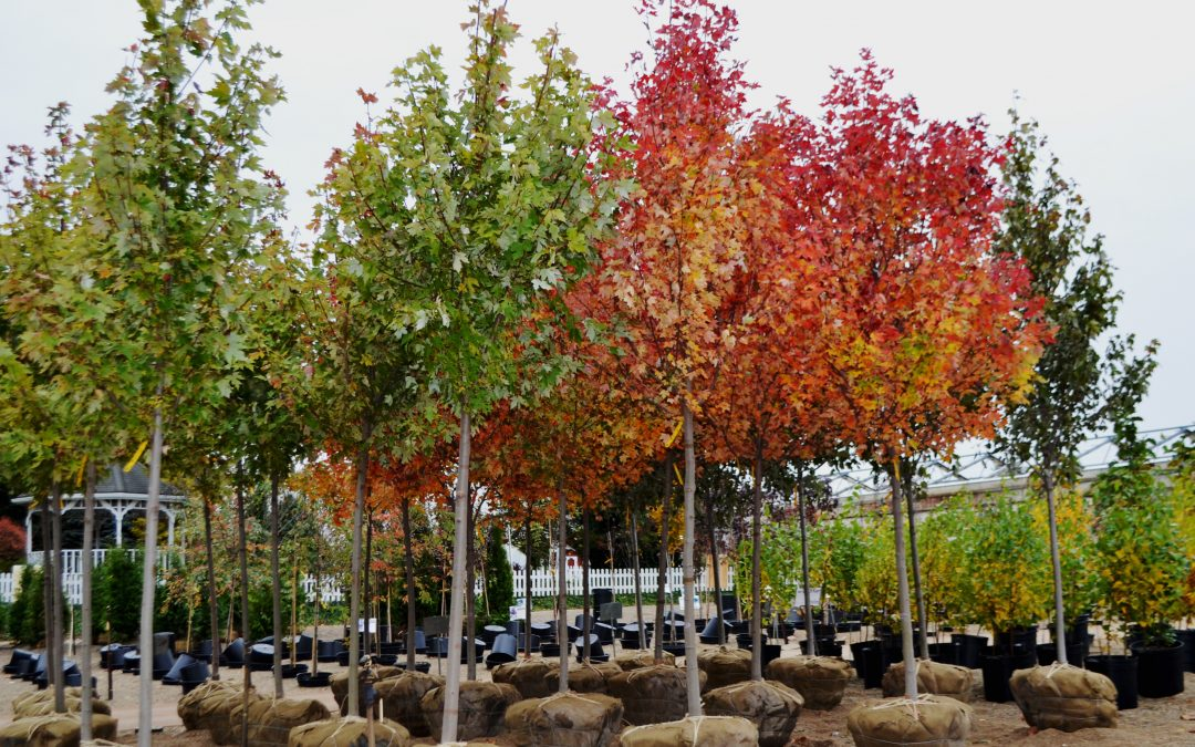 New Trees & Fall Color!