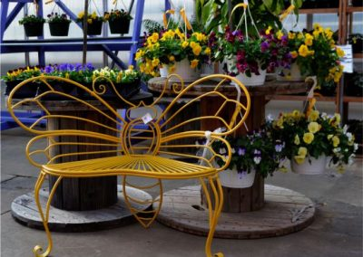 pansies with bench