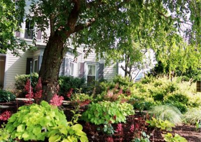 shade garden by house_summer 2021