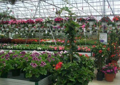 greenhouse7_square